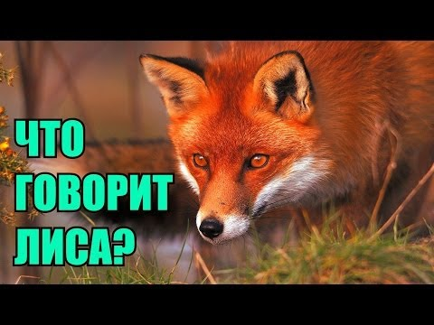 "Ylvis - The Fox (""Что говорит лиса?"" russian cover by Boloria)"